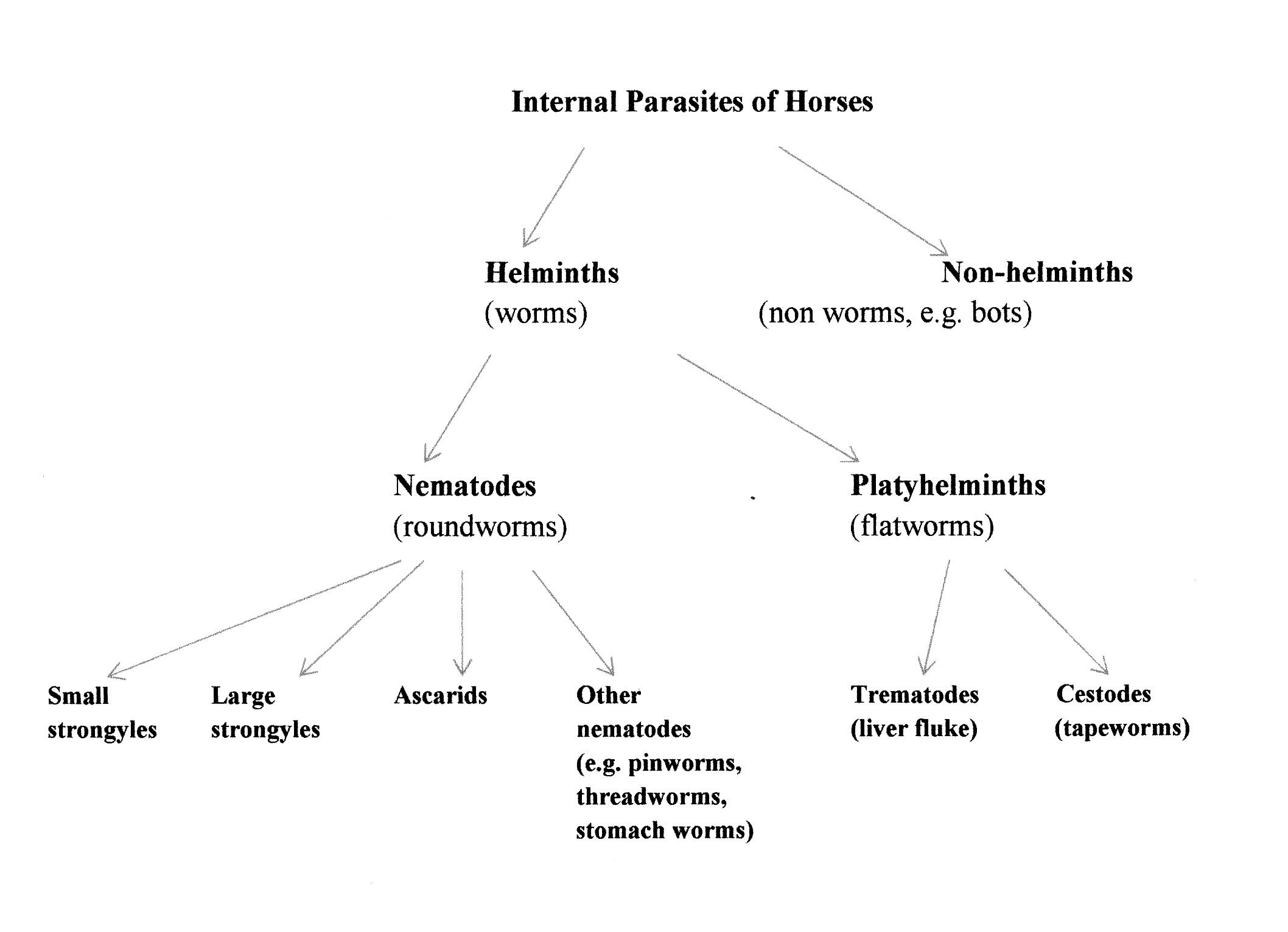 Internal Parasite Worm Diagram - Basic Guide Wiring Diagram •